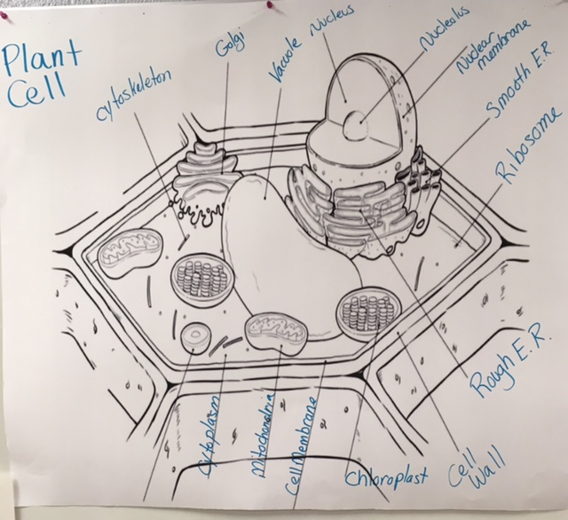 cartoon plant cell diagram labeling